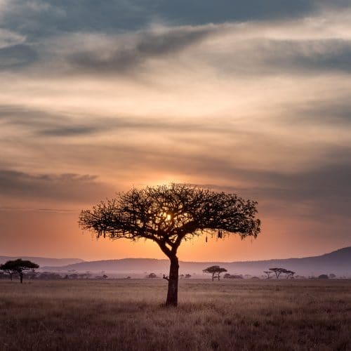 South African Savanna